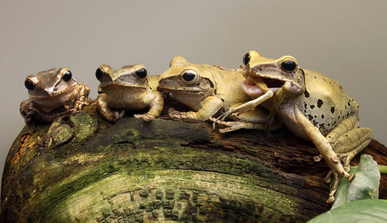 Zespół składający się z 4 żab.